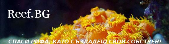 reef.bg